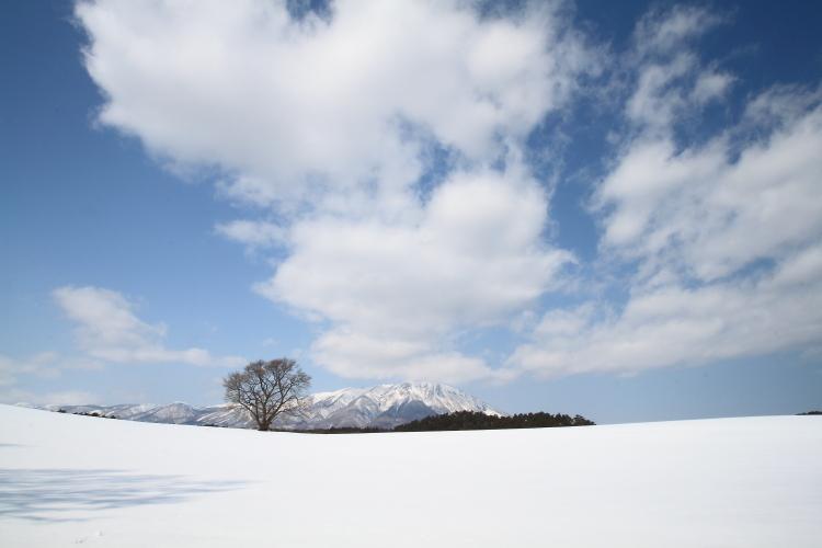 桜の木雪景色画像